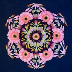 Beautiful mandala art created with fresh flowers and other organic materials, by Kathy Klein an Arizona, USA based-artist. Mandala Art, Mandala Flower, Flower Art, Flower Circle, Land Art, Durga, Mother Nature Tattoos, Tattoo Nature, Ephemeral Art