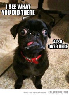 DYING i see what you did there!  and over there too! www.pinterest.com/taddhh/crazy-and-funny-stuff themetapicture com/derp-pug-is-on-to-you/