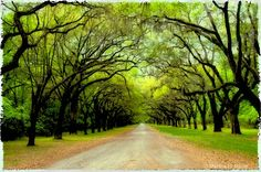 Wormsloe Plantation in Savannah, Ga    Saw this picture while planning our wedding. Gorgeous. Just another great reason to visit Savannah.