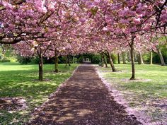 """Awesome! """"Spring time in the city, Dublin #trees from Herbert Park"""" #FriFotos by @cottageireland"""