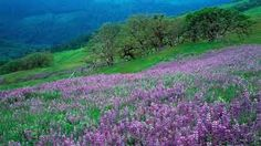 Image result for fields of flowers images
