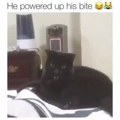 Powered up bite - adorable kittens Funny Animal Jokes, Cute Funny Animals, Funny Animal Pictures, Animal Memes, Funny Cute, Cute Cats, Hilarious, Funny Dog Videos, Funny Video Memes
