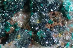Hentschelite. Great Australia Mine, Cloncurry, Cloncurry District, Mount Isa - Cloncurry area, Queensland, Australie Taille=6.5 mm