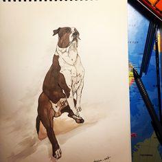 #ast #amstaff #american staffordshire terrier #амстафф #акварель