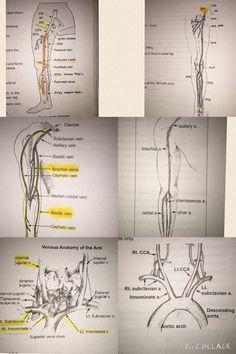 Venous & arterial systems side by side. Ultrasound School, Ultrasound Physics, Vascular Ultrasound, Ultrasound Sonography, Cardiac Sonography, Ultrasound Technician, Interventional Radiology, Ultrasound Pictures, Medical Anatomy