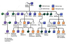 Queen Victoria Family Tree showing the carriers and individuals who either carried the hemophilia trait & passed it on and/or were hemophiliacs themselves. The trait was not passed on to the current reigning line.