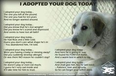I adopted your dog today...