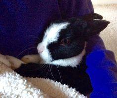 My pet rabbit Truffle! Repin as he wants to be famous!