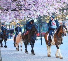 Kungsträdgården in Stockholm – Eat, Click, Travel and Repeat! Cherry Blossom Tree, Trees To Plant, Stockholm, Repeat, Horses, City, Travel, Animals, Viajes