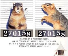 Squirrel Proof Bird Feeders and How To Beat and Defeat those thieving squirrels