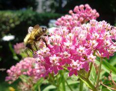 My favorites. Bees, milkweed, shasta daisy, & coneflowers...