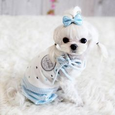 This is they style of cut I do on my maltese, a Korean Cut.  Love it!