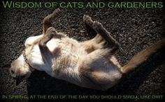 Photo #quotes for lovers of #cats and #gardening #spring