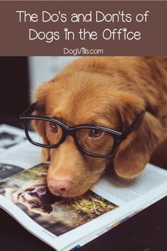 Planning to bring your dog to the office? Check out these do's and don'ts first! Dog Training Bells, Training Your Puppy, Dog Training Tips, Small Dog Accessories, Tiny Dog Breeds, Dogs With Jobs, Dog Grooming Shop, Office Dog, Dog Illustration