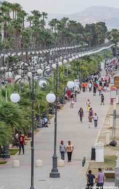 "Cyprus Larnaka. ""Phinikoudes"" (Palm Trees) coastal promenade in Larnaka, is busy day and night, Summer and Winter, Springtime and Fall."