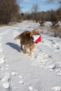 Hey, Santa!  I found your hat!!