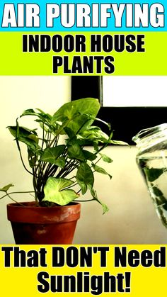 Want to add a touch of greenery to your home but live in a shady environment or don't have much sunlight? No worries. Here are 11 of the best air purifying indoor house plants that don't need sunlight Best Indoor Plants, Cool Plants, Perfect Plants, Indoor Plants For Oxygen, Best Plants For Home, Indoor House Plants, Indoor Plant Decor, Indoor Shade Plants, Indoor Plants Names