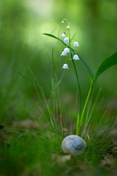Lily of the valley by Thomas Herzog on 500px