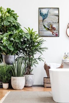 Best Indoor Plant Decoration To Copy Right Now 22