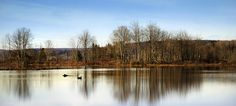 Reflections Photograph - Reflections On Golden Pond by Christina Rollo