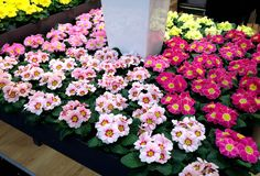 Feria Essen. plants flower  Plhttp://elinvernaderodenaan.es/archivos/1013