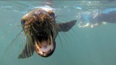 An small example about the marine life here in Baja, come and play with this playful sea lions who are smiling you :D