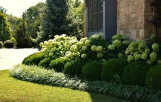 Hydrangeas bordered by boxwoods and liriope lawrencelandscape gallery landscaping hydrangea boxwood liriope plants is part of Hydrangea landscaping - Cheap Landscaping Ideas, Front House Landscaping, Hydrangea Landscaping, Farmhouse Landscaping, Front Yard Landscaping, Mulch Landscaping, Fence Ideas, Front Yard Hedges, Southern Landscaping