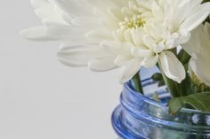 White flowers in blue vase by Otago Media  on Creative Market