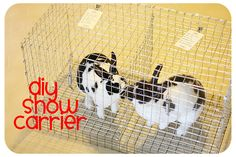 How To Build a Transport Cage for Show Rabbits