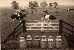 www.zuivelmuseum.nl - - - - - - - -   Zo de koeien zijn weer gemolken!