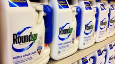 According to the Office of Environmental Health Hazard Assessment (OEHHA), Glyphosate, the active ingredient in Monsanto's popular Roundup weed killer, will be added to California's list of chemicals known to cause cancer effective July 7.