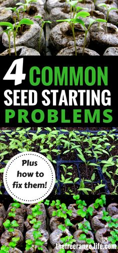 Indoor Gardening: Starting Seeds can be tough. Troubleshoot the 4 main seed starting problems and learn how to fix them Gardening Ideas and Tips   Organic Gardening Tips