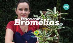Faça você mesmo uma placa com bromélias (placa de fibra de coco) #78 - DIY