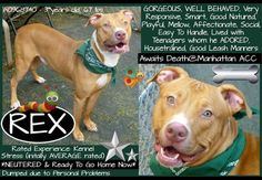 For assistance and information regarding adopting or fostering this dog, please email MustlovedogsNYC@gmail.com. Please include dogs name, dogs A number (ex. A123456) and the facility. All three of these items can be located on every dogs individual flyer.