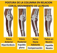 La relación que hay entre la posición de la columna vertebral y la pelvis #fisioterapia