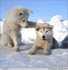 WALTER&PREDIGER : スノードーム 白熊