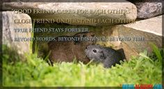 Friendship Quotes For Best Friends. #Quoteacademy