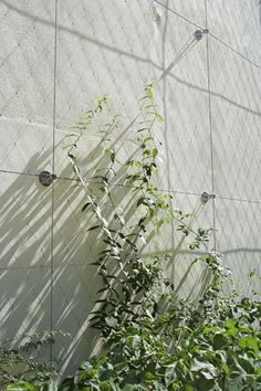 Green facades in small spaces | Tensile Design & Construct Tensile.com.au