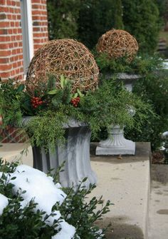 grapevine balls in urns - use holly, boxwood, cedar, blue spruce; soil acts as as an oasis floral foam when arranging the cuttings, and if kept damp, the evergreen cuttings will stay fresh through the entire holiday season.