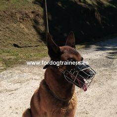 Extra Grande Negro D/&D Europet Nylon bozal para Perros