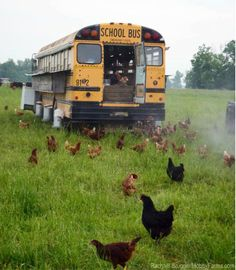 Schoolbus Chickens...Makes sense, and probably a bunch of eggs.  :)