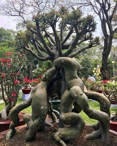Adenium Tree Plant in 2019 Trees And Shrubs, Trees To Plant, Weird Trees, Twisted Tree, Unique Trees, Old Trees, Tree Shapes, Desert Plants, Nature Tree