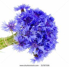 simple cornflower bouquet