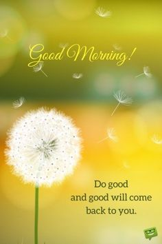 Are you searching for ideas for good morning motivation?Browse around this website for unique good morning motivation ideas. These entertaining quotes will you laugh. Good Morning Friends Images, Good Morning Quotes For Him, Good Morning Beautiful Images, Good Morning Funny, Good Morning Inspirational Quotes, Good Morning Picture, Good Morning Messages, Good Morning Good Night, Morning Pics