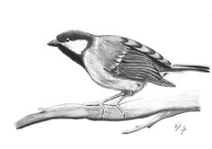Sparrow (graphite)
