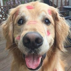 Pup got some smooches cute animals dogs adorable dog puppy kisses animal pets funny animals funny pets funny dogs Animals And Pets, Baby Animals, Funny Animals, Cute Animals, Cute Puppies, Cute Dogs, Dogs And Puppies, Dog Pictures, Animal Pictures