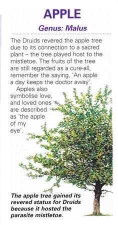 Sacred celtic tree - Apple- Pinned by The Mystic's Emporium on Etsy