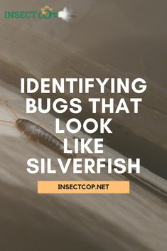 Dealing with silverfish infestation, or is it something else? Here's which bugs look like silverfish and how to tell them apart to make sure that you know exactly what your problem pest is. #InsectCop #silverfish #bathroombugs #bugcontrol #silverfishcontrol #housekeeping #housekeepingtips #help #tutorial #pestcontrol #pestcontroltips #pests #insects #pestfacts #pestcontrolfacts #nature #facts #naturefacts #entomologist Mosquito Control, Bug Control, Silverfish Control, Woodlice, Insect Orders, Earwigs, Types Of Insects, Housekeeping Tips, Live Long