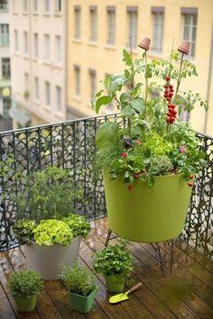 コンテナ栽培でもミニ野菜を選べば、ちゃんとコンパニオンプランツもできます!