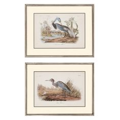 Paragon Decor Audubon Herons Framed Wall Art - Set of 2 - 4733